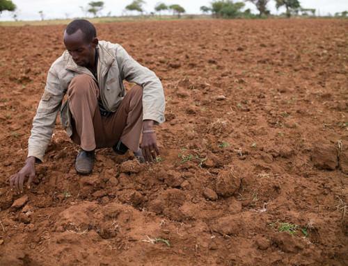 – Kritisk økning i antall sultende i verden
