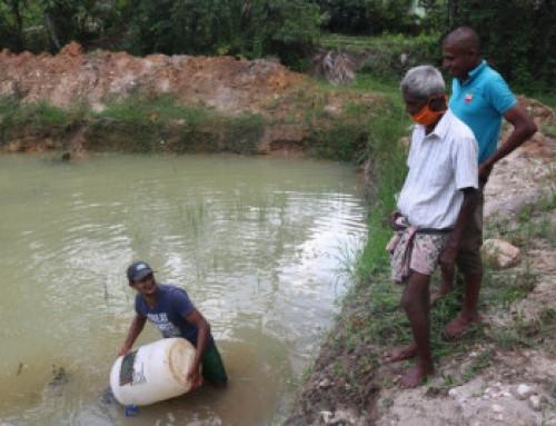 Verdens miljødag – matsikkerhet er i fokus på Sri Lanka