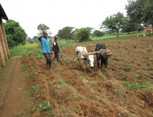 Økt produksjon for småskalabonde i Nord-Uganda