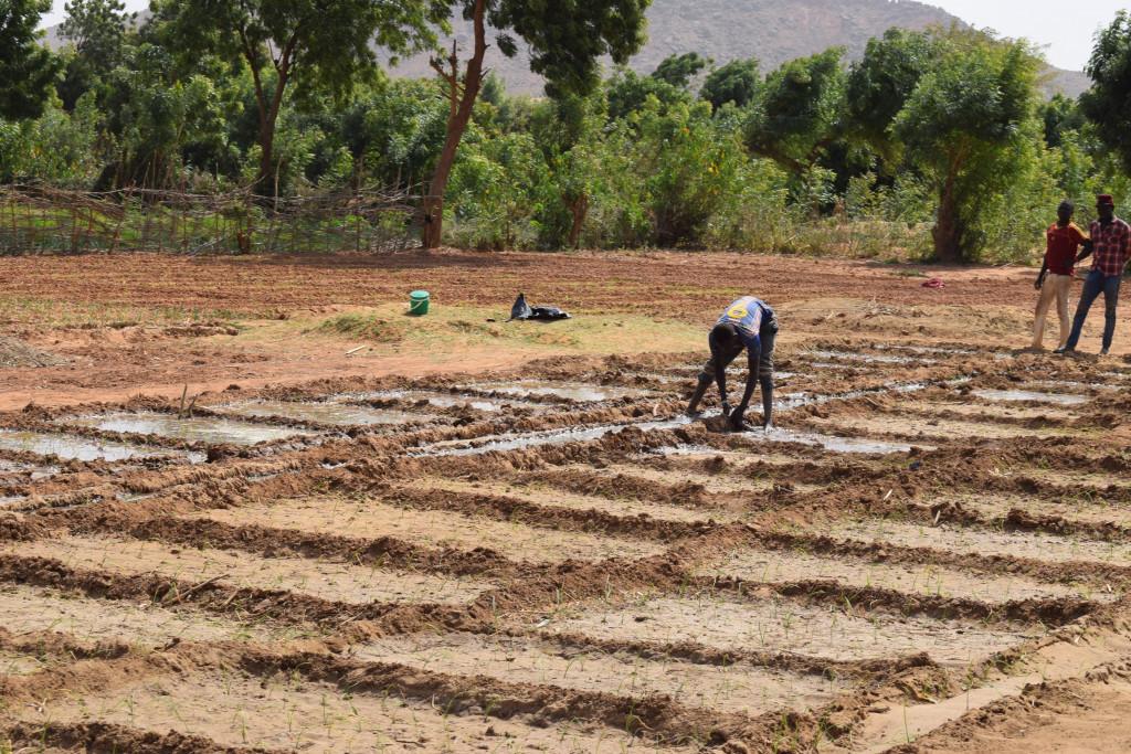 Bønder i Niger graver vanningskanaler for åkrene sine.